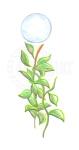 Rubber Plant & Moon [ORIGINAL $Au 85] A5 Pencil on paper